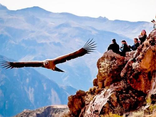 Condor Canyon Cusco