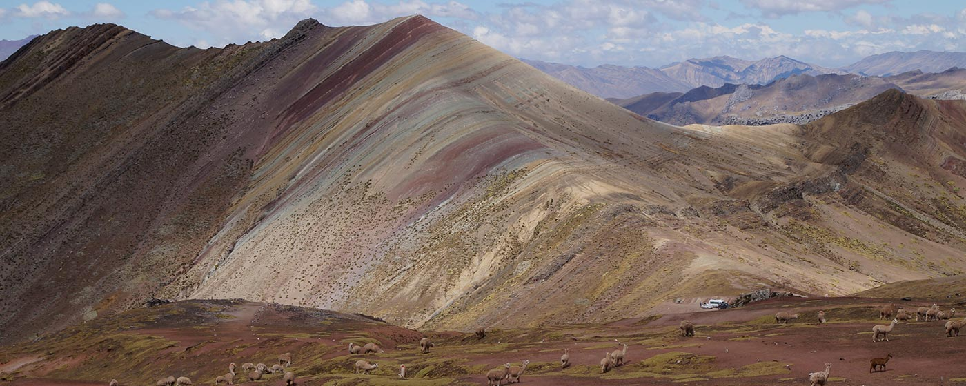 Beautiful view of Rainbow Coloured Mountains with many Alpaca in the foreground